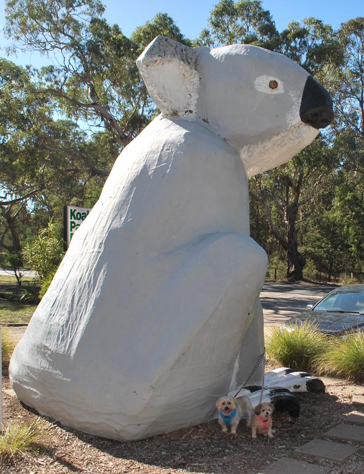 tdbt_pi_big-koala1
