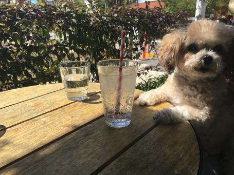 Miss Audrey enjoying the sunshine