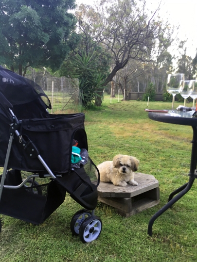 Chillin in the yard while the hoomans drink wine!