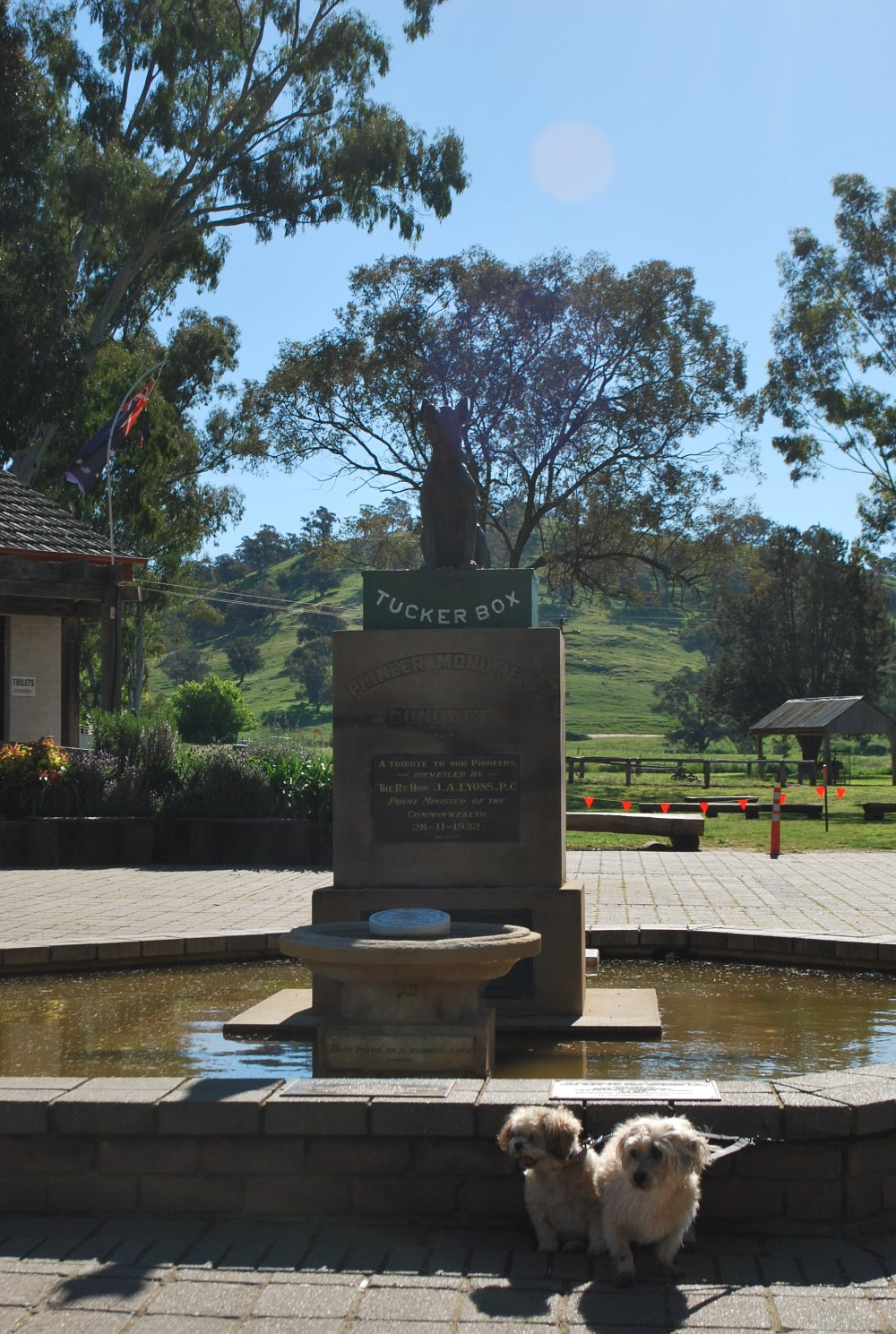 dog-on-tuckerbox