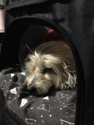 Snoozin in the comfy Vivo Pet Stroller