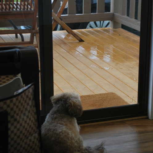 Audie gazing at the rain
